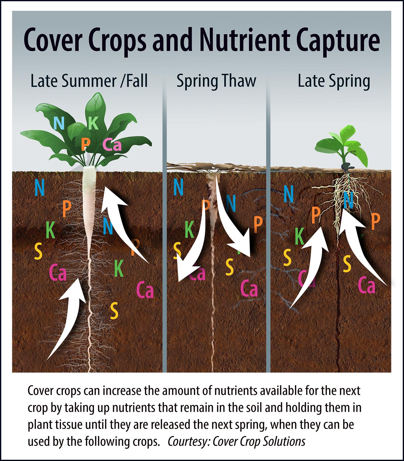cover_crop2.jpg